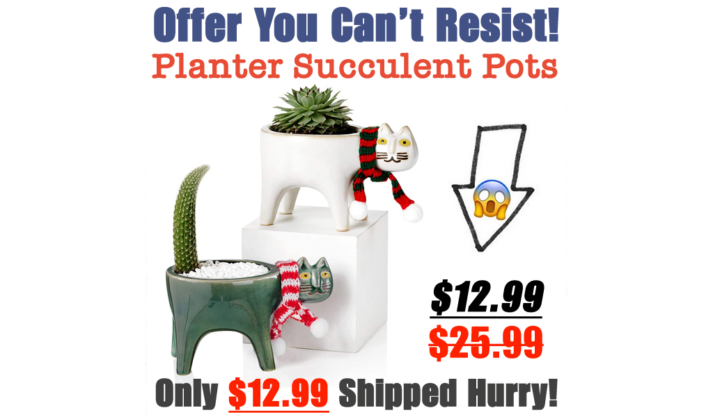 Planter Succulent Pots with Drainage Only $12.99 Shipped on Amazon (Regularly $25.99)