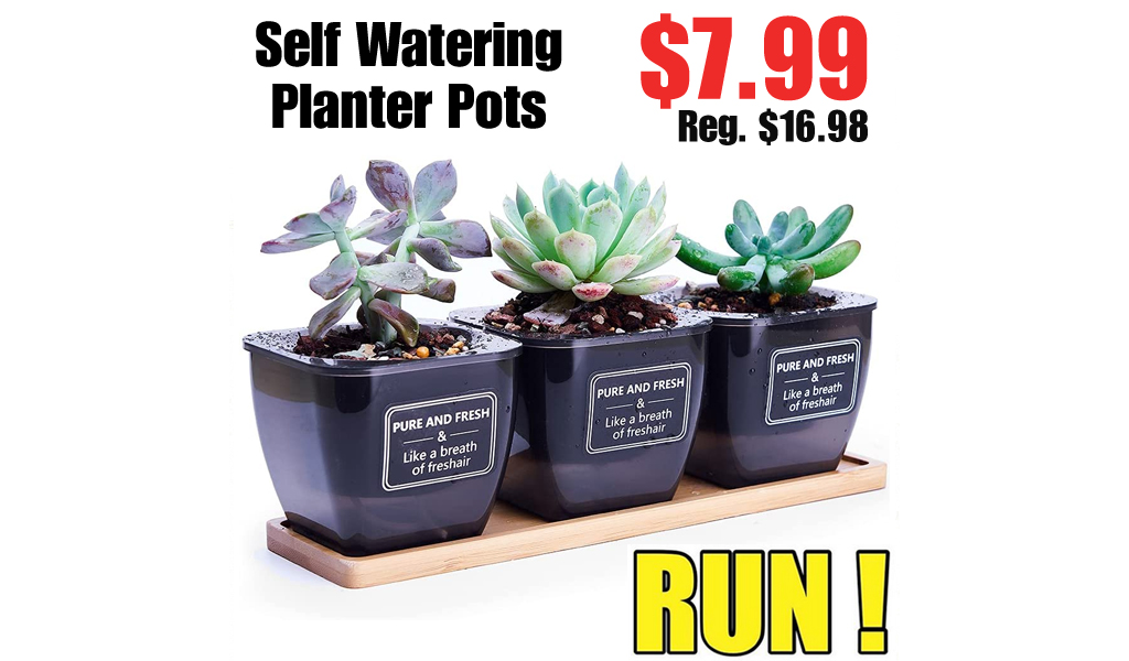 Self Watering Planter Pots Only $7.99 Shipped on Amazon (Regularly $16.98)